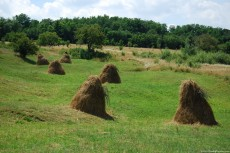 Haystacks on Meadow