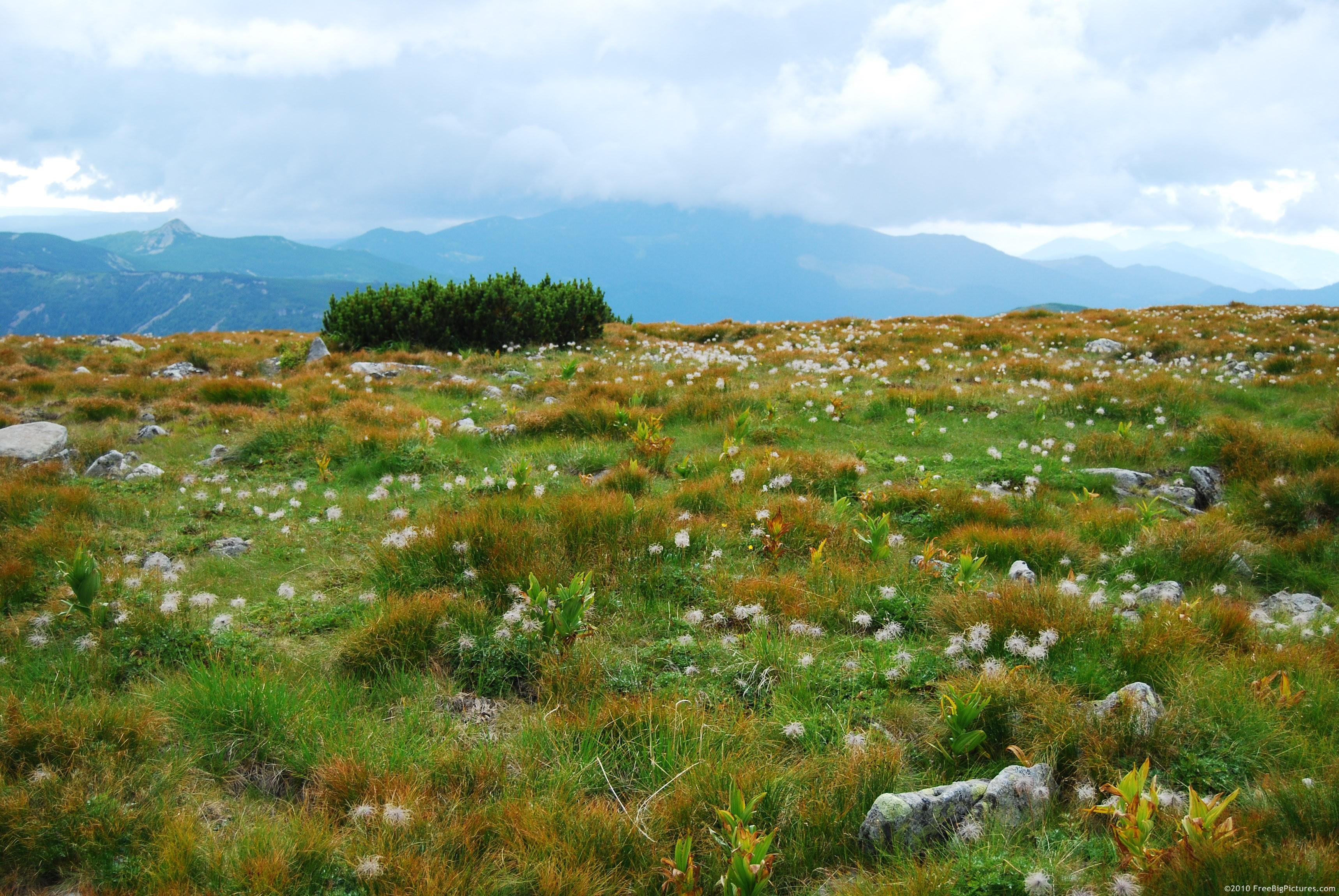 Alpine Grassland