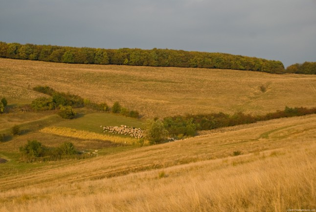 A beatiful, cosy scenery of autumn on a rusty pasture bathed in the warm colors of the sunset. On the background on the hills a decidous forest which is steel green can be seen.