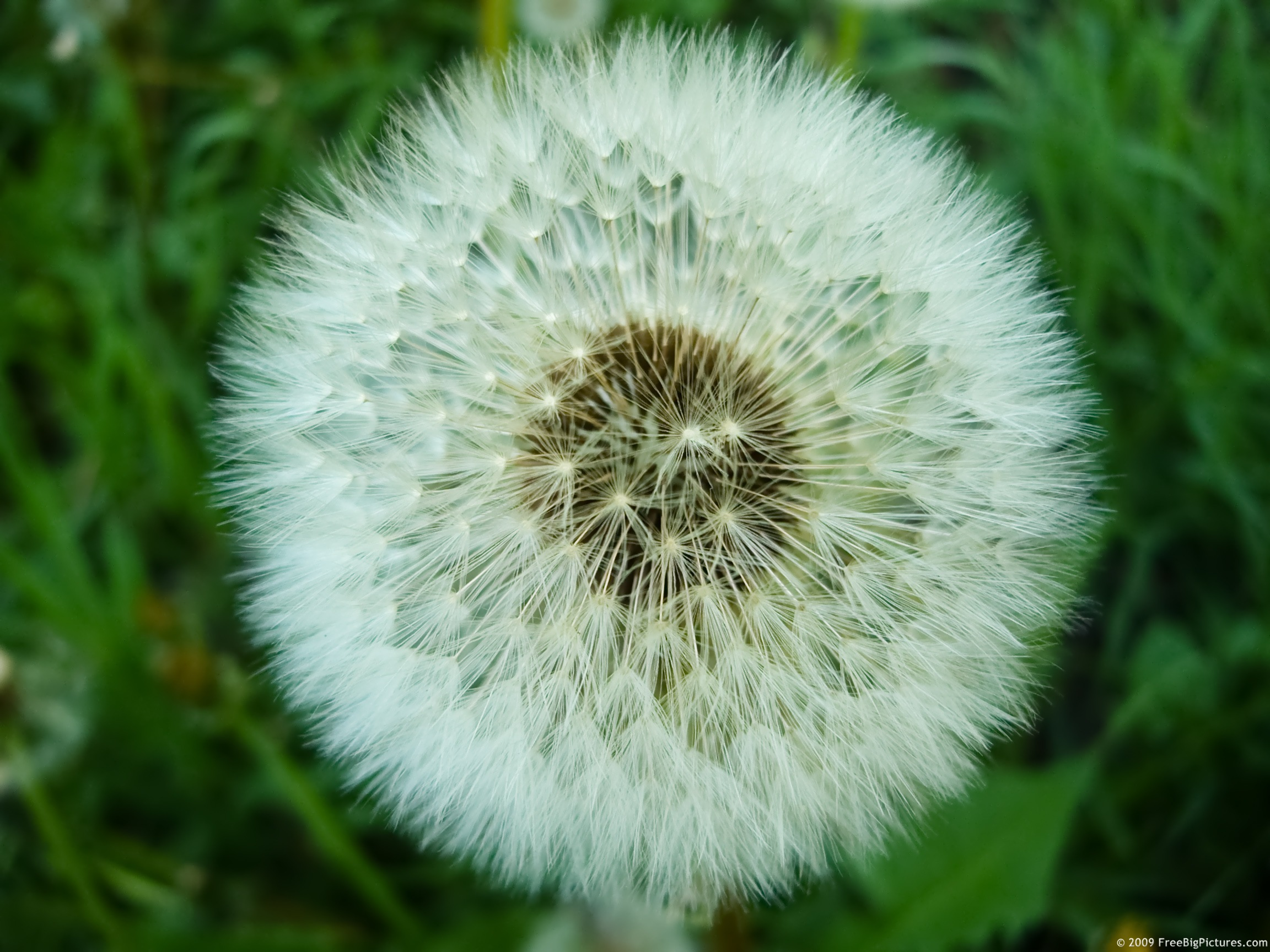 blow ball in spring