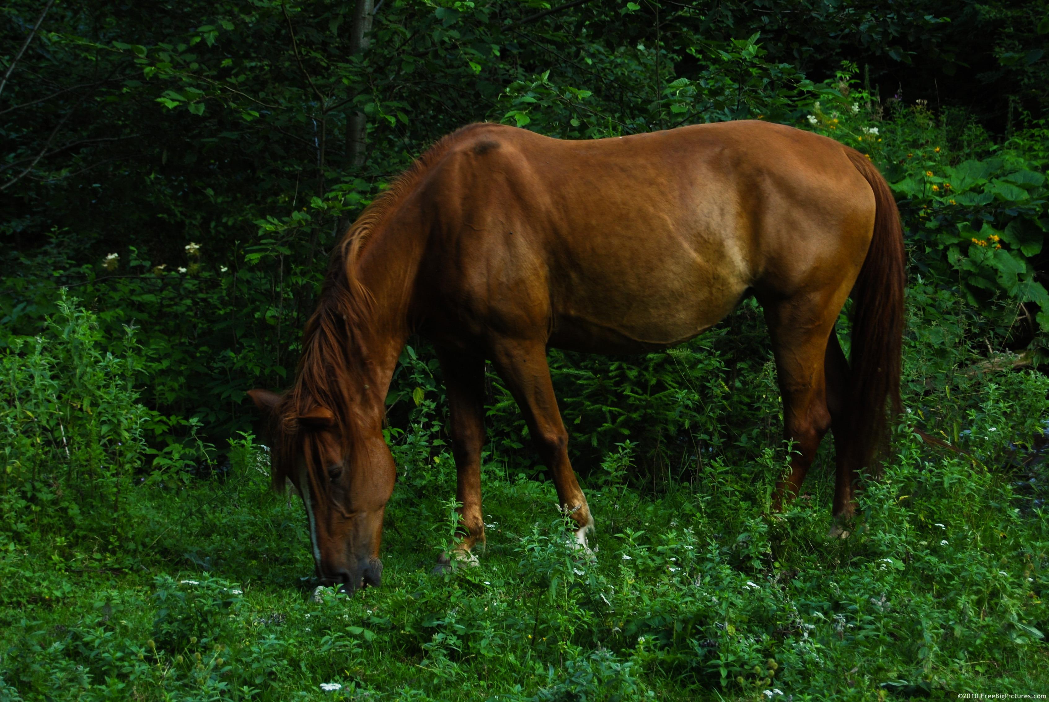 Chestnut Horse - photo#18