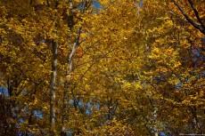 Fall Nature