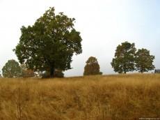 Fall Scene
