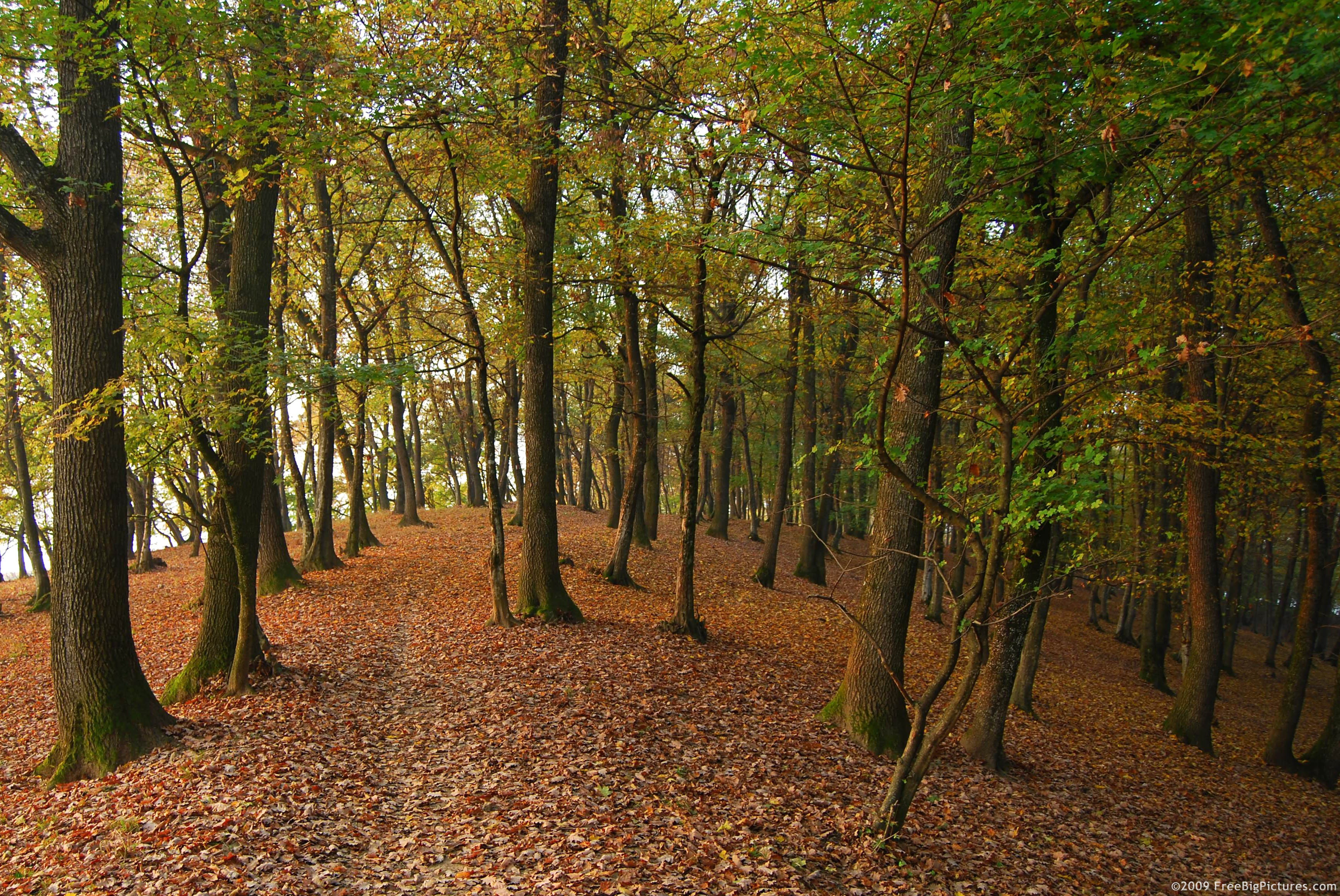 Free big forest pictures - path is a pleasing image