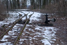 Forest Railway