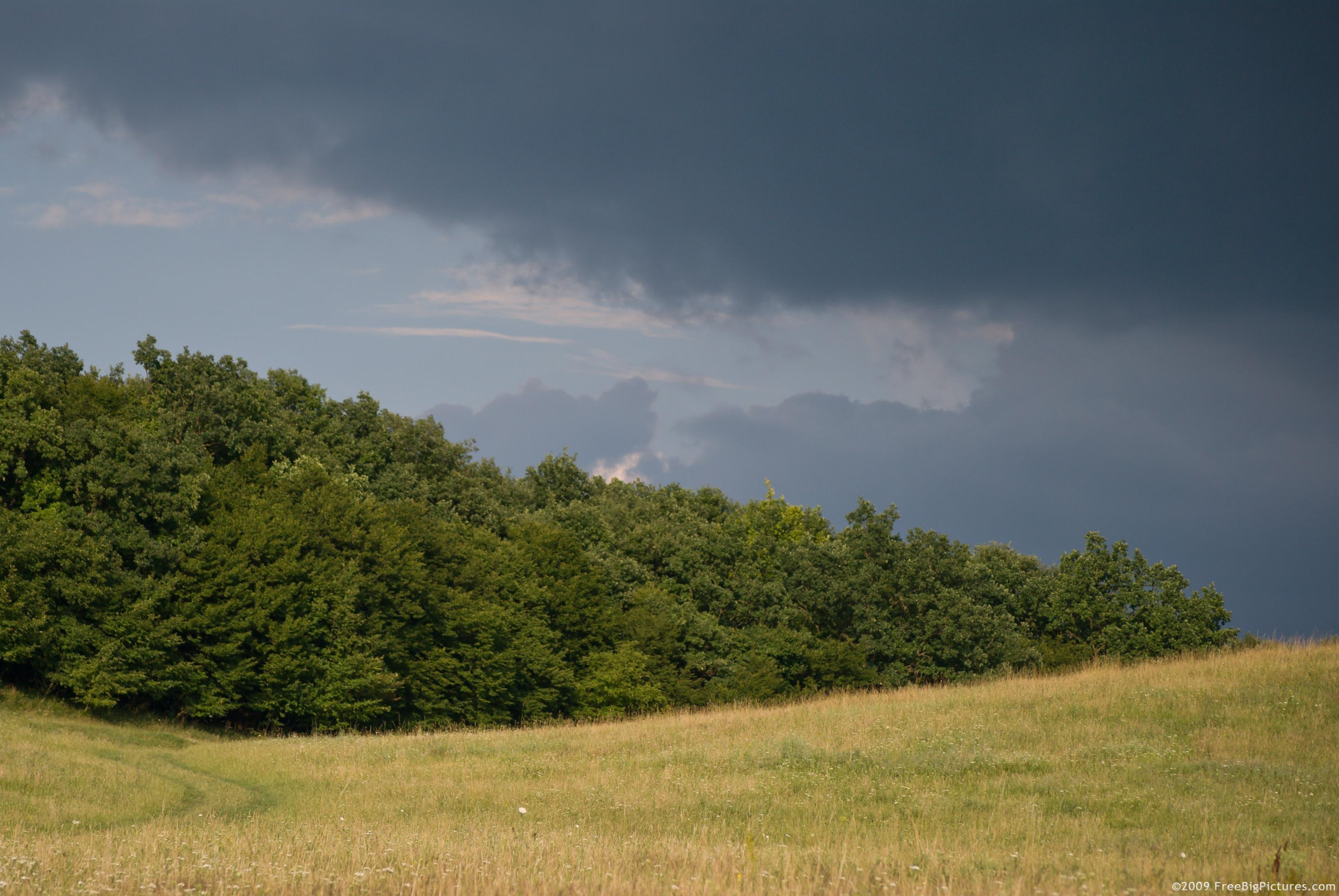 Rainforest Storm Pictures 56