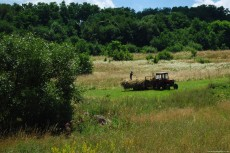 Gathering Hay