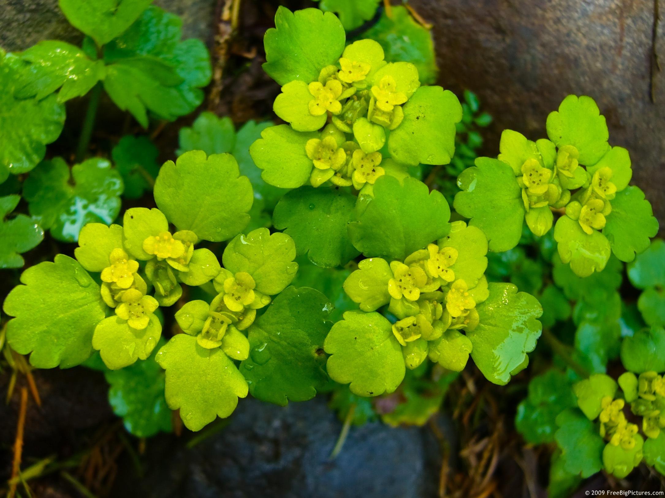 Green Flowers Beautiful Flowers