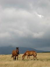 Horses Color
