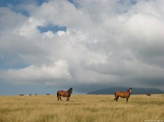Horses Land