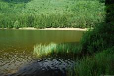 Lake Vegetation