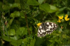 Murbled White