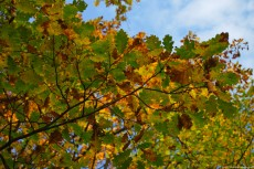 Rusty Leaves
