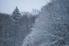 Picture of December Snow Fall
