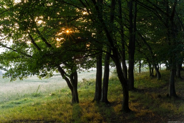 Image of Sunlight in Woods before Sunset