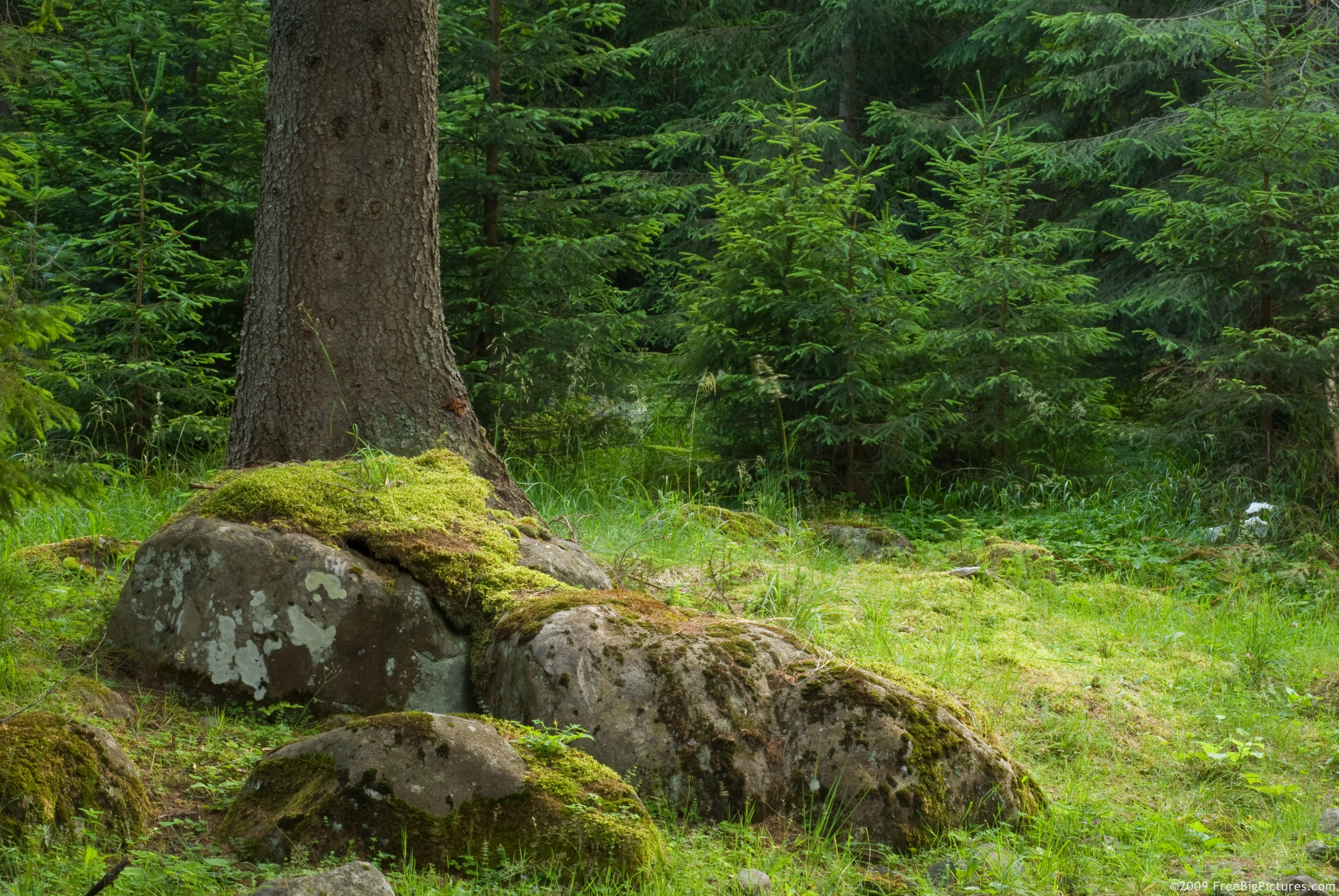 <b>Tree Trunk</b> Pictures, Images and Stock Photos - iStock