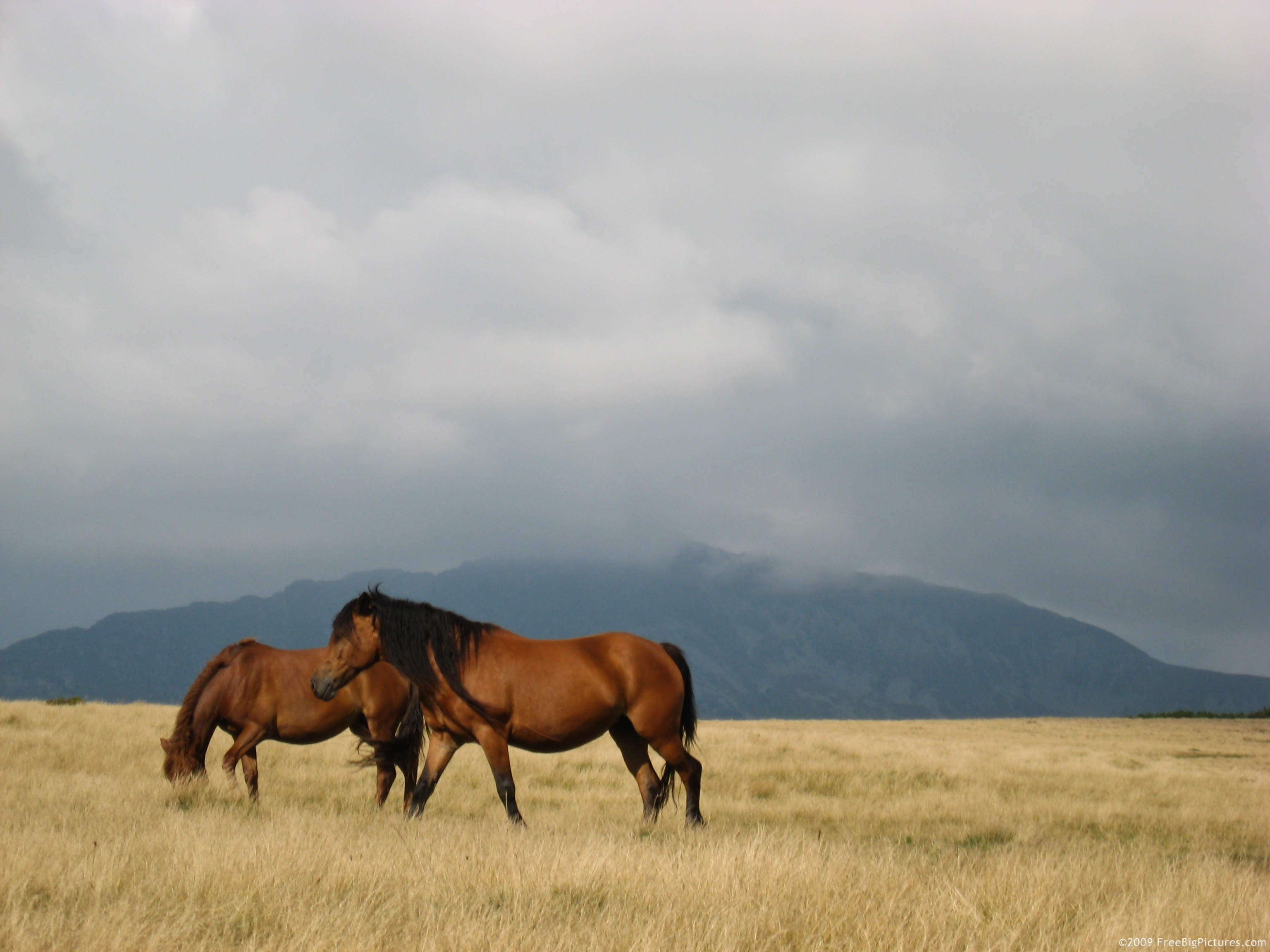 High resolution pictures horses is a free image to download