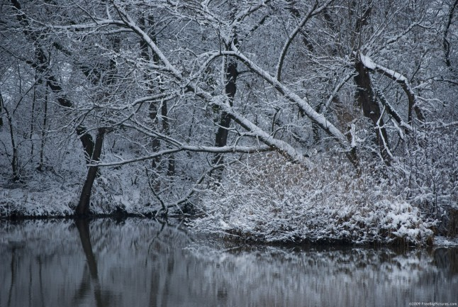 High Resolution Winter Pictures - Trees is a free comely image
