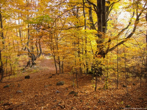 A path in autumn colored wild deciduous forest