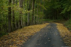 Autumn path in a forest with deciduous trees