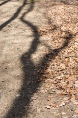 A few branch shadows in a sunny day, projected to a circulated track in a deciduous forest with trees without leaves prepared for hibernation in fall