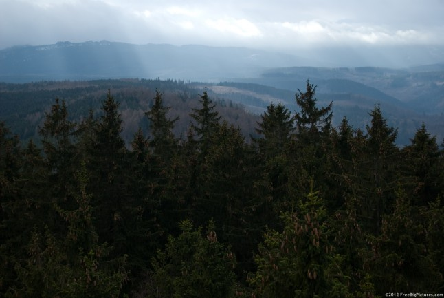 Forests of coniferous dominating a mountain landscape