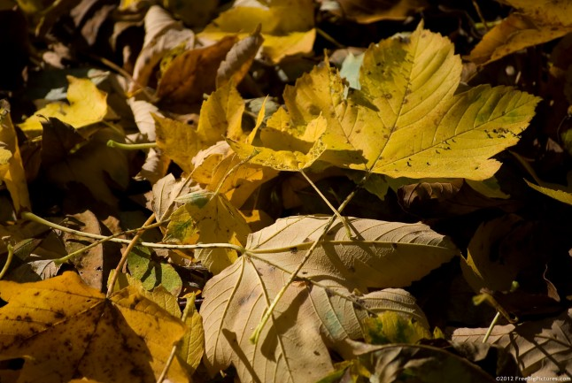 Fallen leaves in autumn in a deciduous forest