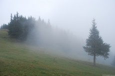 Foggy Hill