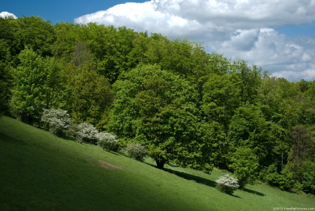 The green freshness of a forest in spring on sunlight