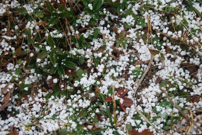 Graupel precipitation is formed when the water solidifies on ice particles