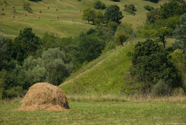 Dry grass in Haystacks on the hills