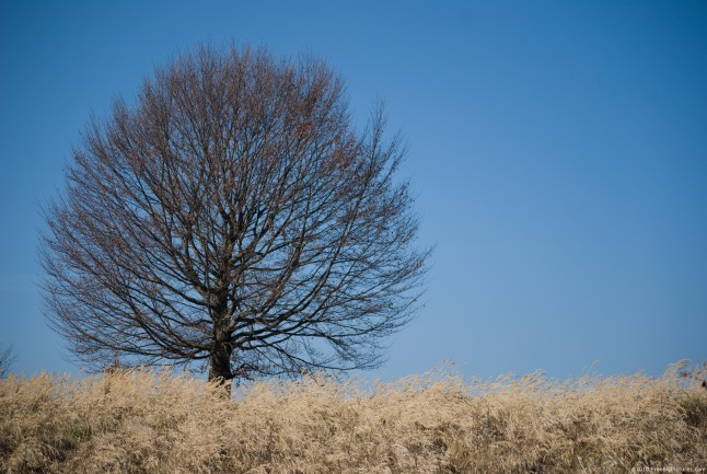 Lone tree in a dry glade, in autumn
