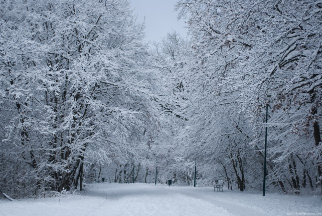 Snowy alley in a park, on a chilly January afternoon