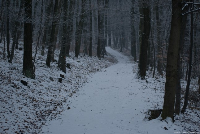 A path in the forest on a snowy winter