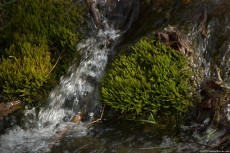 A stream moss covered with crystal clear water