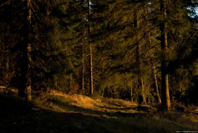Forest surrounded in the warm light of the sunset