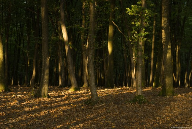 Shadows and lights of tree, in a forest with soil covered by leaves
