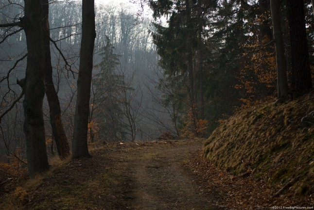 An old road which descends in a twilight forest
