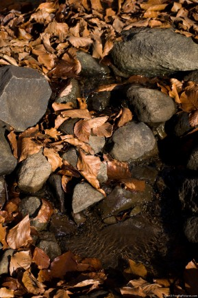 Dried leaves of a deciduous forest, spread on the water of a creek