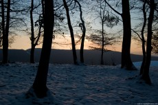 Forest lit by sunset in winter