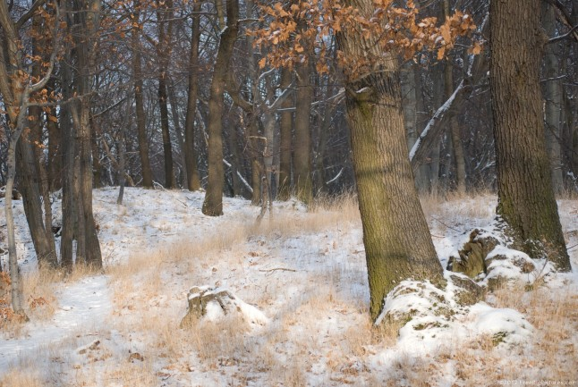 Dry vegetation, leaves and grass, in winter on woods