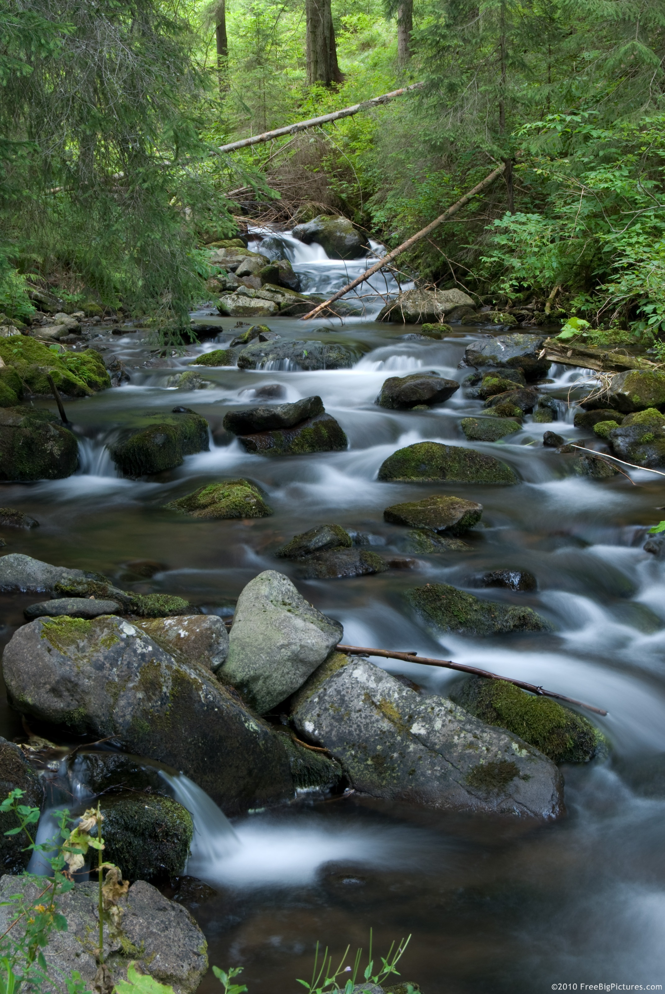 The Oa Stream